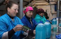 На Ворончанском спиртзаводе производят стеклоомыватель