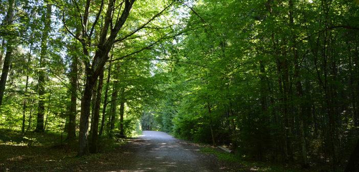 В Кореличском районе снова можно посещать лесные массивы