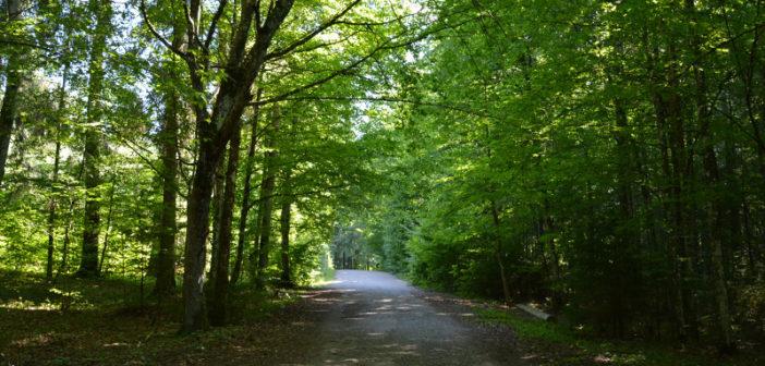 В Кореличском районе введен запрет на посещение лесов