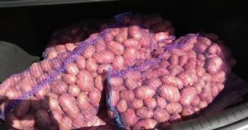 В Кореличском районе задержали вора картофеля