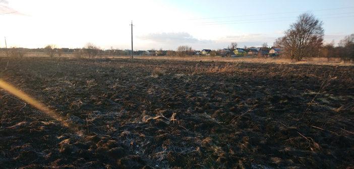 Кореличские пожарные спасли деревню Лесок от приближающегося с поля огня