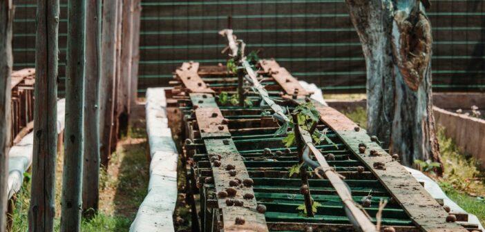 Как развилась улиточная ферма в деревне Долгиново за последние 5 лет